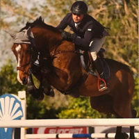 Reference horse: Gelding from Lord Pezi with rider