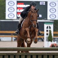 Referenzpferd: Wallach bei der Hunterpruefung mit Reiterin